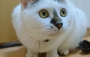 やみつきレタス?ベジタリアンになってしまった猫ちゃん、2匹でレタスばっかりをパクパク食べる。