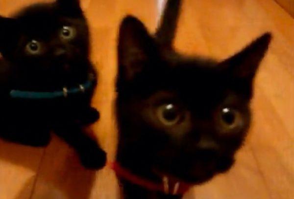 2匹の子猫がマジ天使。「みゃぁ~う」「みゃ~おん」甘えた声がたまらない!