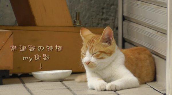 ラーメン屋の招き猫? 毎日一番に並ぶ常連猫さん