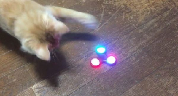 光るハンドスピナーに興味津々の子猫ちゃん。「ボクも回すにゃん! 猫パーンチ!」