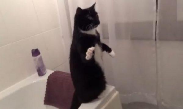 「こっちへ来いニャー!」猫が立ち上がって鏡の中の自分を呼ぶ姿が必死すぎる