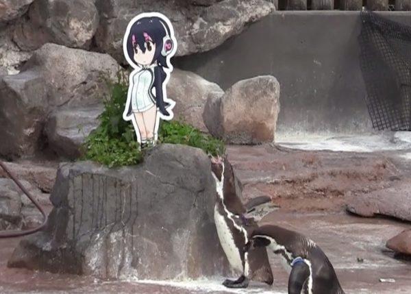 「二次元に恋したペンギン」グレープ君、『けものフレンズ』フルルちゃんのパネルに看取られて天国へ