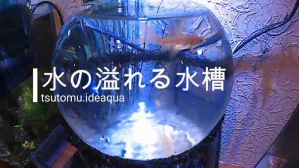 まるで小さな水族館! 水があふれる球体の水槽を作ってみた