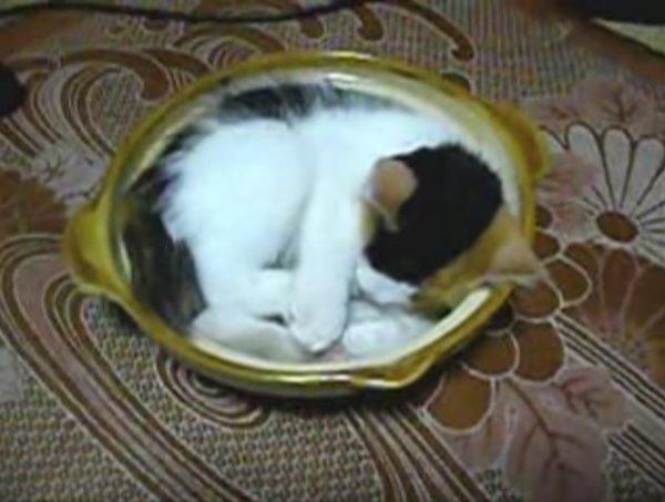 """ねこは""""お鍋""""で丸くなる! ねこ鍋ブームはこの動画から始まった"""