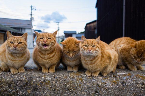 小さな島にニャンコ150匹 瀬戸内海の「ねこ島」から 現地ねこ様の生活風景をお届け【猫の日】