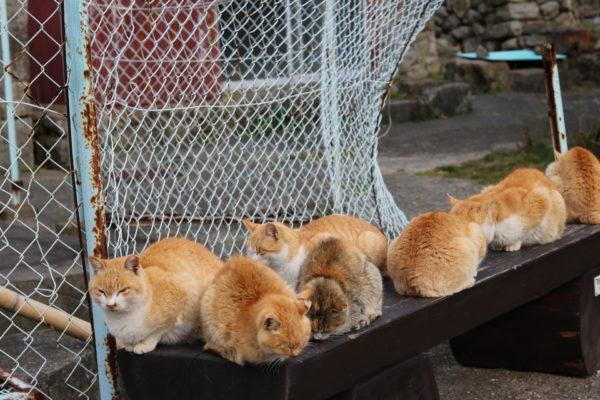 もふもふ毛玉150コ ねこの楽園「青島」から撮れたてほやほやのニャンコ写真集をお届け【猫の日】
