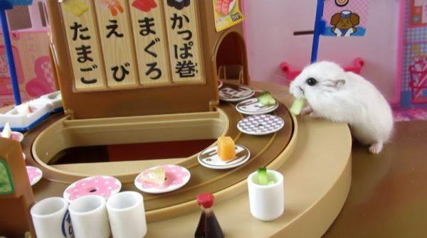 フワフワのジャンガリアンがリカちゃん人形の回転寿司屋さんにやってきた「いらっしゃいませ! 活きのいいネタ入ってるよ!」