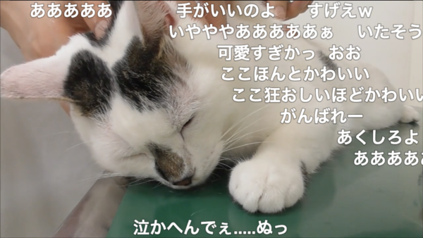 肉球をにぎりしめ「注射にジッと耐える猫さん」に萌え悶えてしまう人が続出!? この気持ちはいったい何なの…