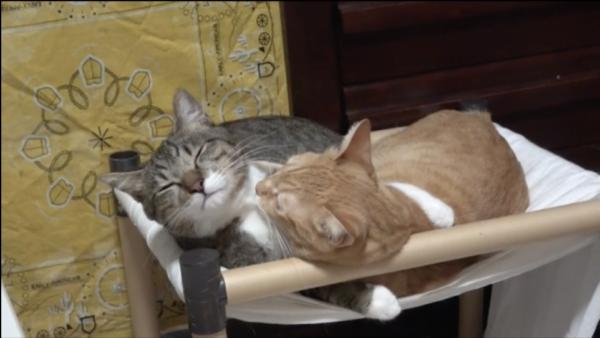 ベッドでラブラブする猫カップルに嫉妬の嵐「リア獣め!」「交尾しないのかよ」の声