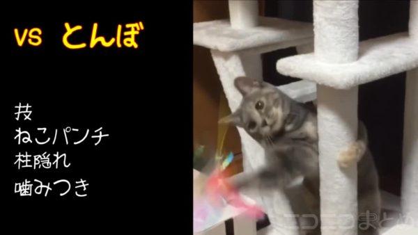 """とんぼやドライヤーと果敢に戦う猫が可愛すぎる件 無数に繰り出される""""猫パンチ""""の嵐に「すごいコンビネーション」と称賛の声"""