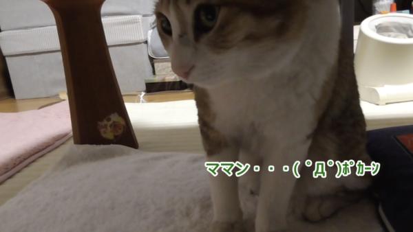 「ブラッシングされブチギレる母猫」を見てビビりまくる娘猫。これは可愛すぎて守ってあげたい…