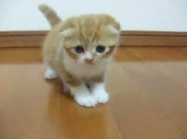 """我が家へようこそ! 子猫が""""到着したその日""""の、ちょっぴり緊張した様子をお届け。あまりの可愛さに発狂者が続出"""
