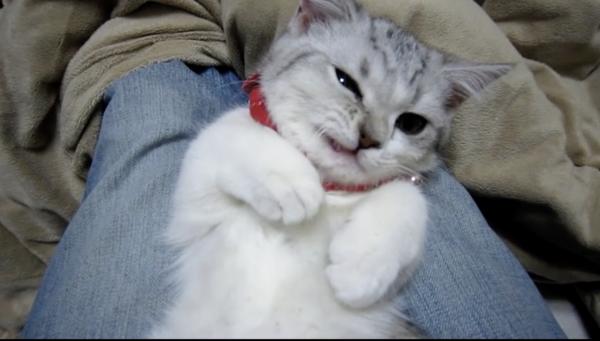 """飼い主に遊ばれ""""チッ""""とする猫を発見。険しいムカつき顔なのに、なぜこんなに可愛いの…と葛藤してしまう人が続出!?"""