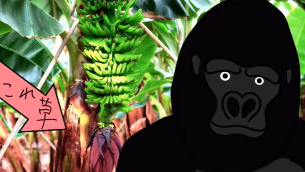 したり顔でバナナうんちくを語るゴリラが超ウザい。3分で振り返る『バーチャルさんはみている』第4話盛り上がったシーン