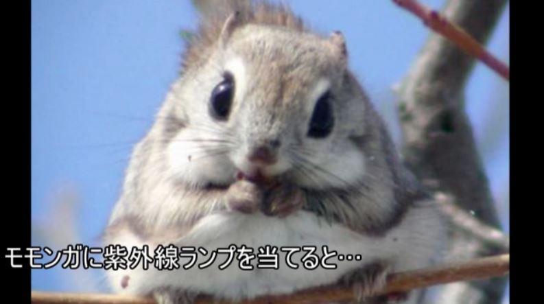 モモンガの画像 p1_19