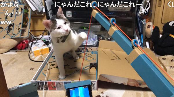 「ニャンだこれー?」Nintendo Laboの釣り竿に猫パンチ! それでもやっぱり怖くて逃げ出しちゃう猫ちゃんのイタズラっ子ぶりにほっこり