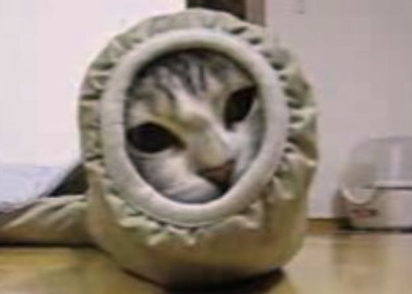 服の袖にすっぽりはまった猫ちゃん。袖の中から高速猫パンチを繰り出すにゃ!