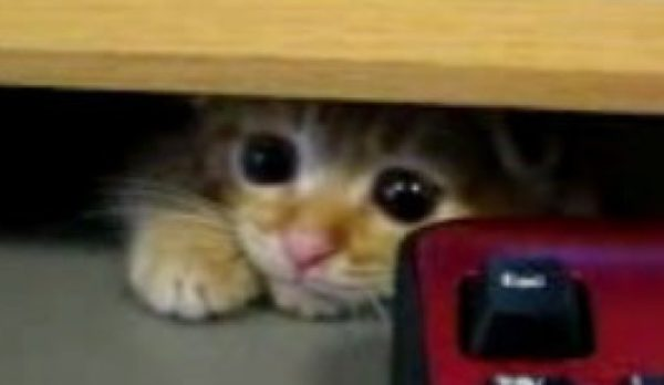 「調子はどうにゃん?」タレ耳の子猫上司が、机の陰からじ〜っとあなたのお仕事を監視してます。