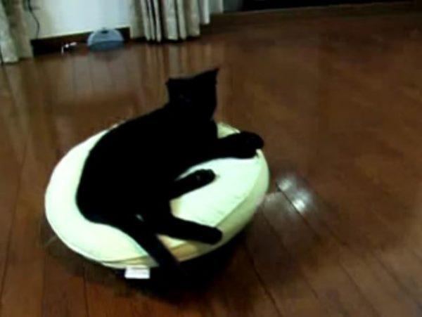 ルンバの上でひと休み。どんなに揺れても動じない猫ちゃん