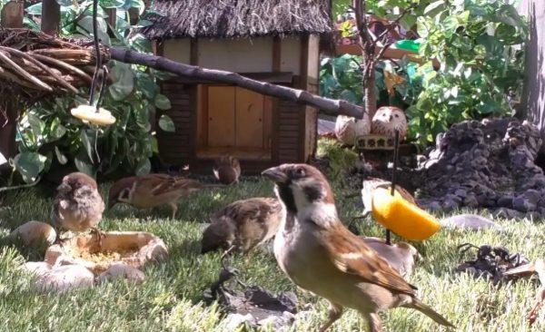 小川の流れる窓辺に作った小鳥たちの食堂、窓際食堂は今日も大繁盛です