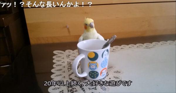 スプーンとカップが奏でる音色に夢中になるインコ。スプーン遊びに夢中になった理由を飼い主が漫画で紹介