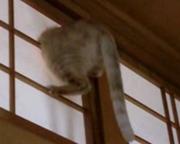 うちの天井付近に猫が突き刺さっていた。猫救出作戦、衝撃のオチ