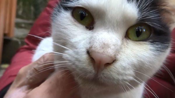 パワースポット・伏見稲荷大社に集う猫たち。膝に乗って撫でてもらう表情にも謎の気品が漂う