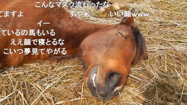 スヤァ…熟睡している馬の表情がオッサン可愛い! 見ているこっちが癒やされる寝顔に「野生を忘れてる」「女房とおなじだ」