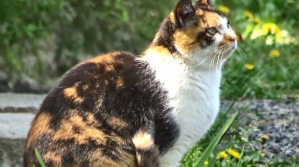 まるまるふくふくした猫ちゃんたち 日本最初の国民公園『京都御苑』でゆったり過ごす様子に「良いご飯もらってそう」