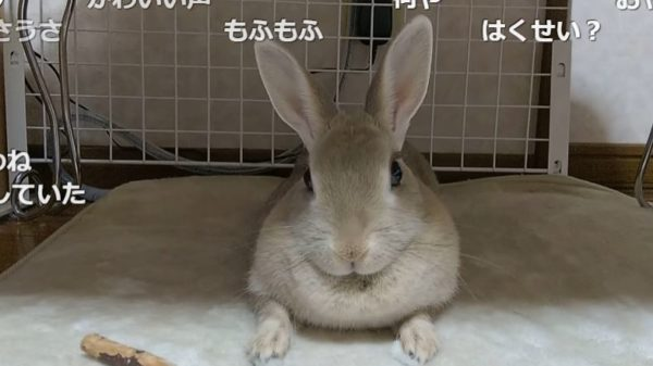 """飼い主の""""おやつ""""の呼びかけにぴょんぴょん応えるウサギさん。他の言葉で呼んでも無反応な様子に「もう、おやつって名前でいいんじゃない?」"""