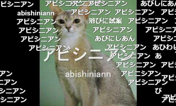 「いくつ知ってるかニャ?」アメリカンショートヘアー、ロシアンブルーetc…次々と現れる47種の可愛いネコの画像&品種名でタイピングの練習