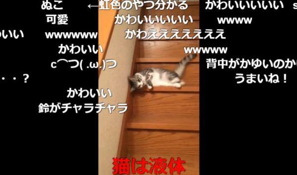 ぬるぬる~っと階段を落ちてゆく猫ちゃん チリンチリンと鈴を鳴らしながら流れるように落ちる様子に「猫は液体」