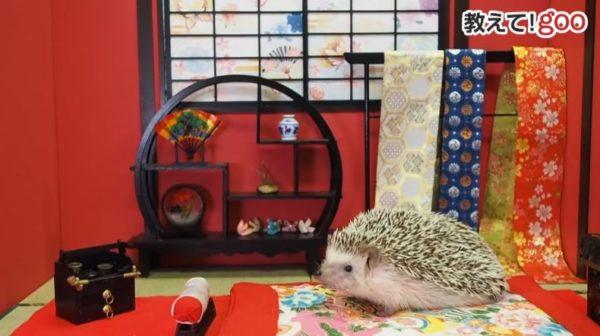 「ここ、ボクのおうちだよ!」ハリネズミさんが小さなお部屋のミニチュアセットを歩き回る様子に悶絶