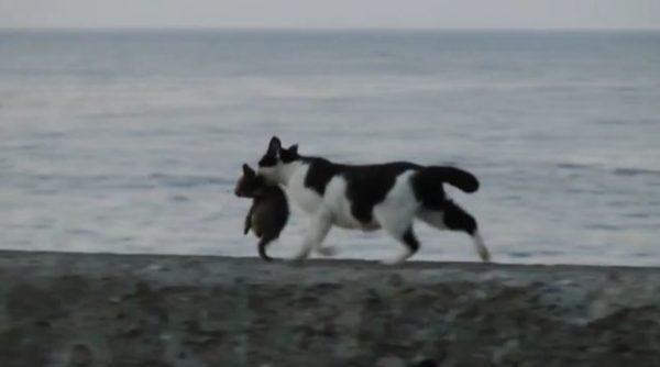 猫の親子が海辺をアニメのワンシーンのように歩く姿に「引越しの途中かな?」「クロネコヤマト」