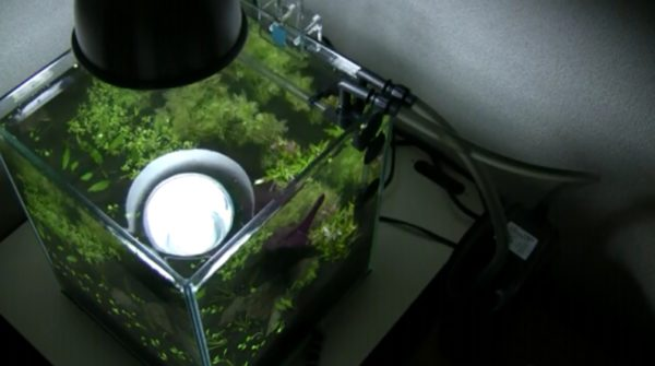 お洒落な『アクアリウム』を作ってみた 水草のレイアウトにもこだわった神秘的な水の芸術が完成!