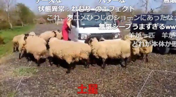 羊が1匹、羊が2匹…羊さんたちの無限ループ 回りすぎてバターになってしまいそう!?