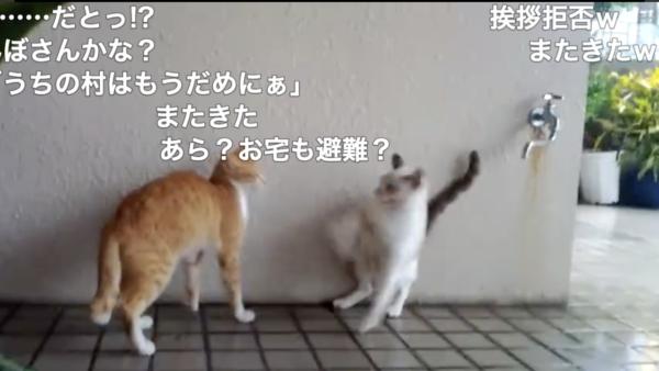 台風に怯える猫さん、避難所を形成するもやや不仲説? 挨拶拒否に涙目