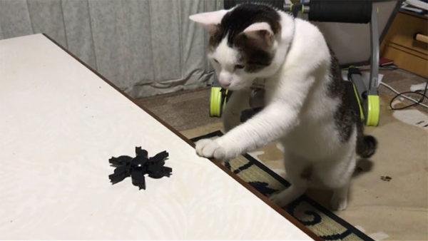 「おぬし…何やつじゃ?」ハンドスピナーを警戒する猫ちゃんがかわいい