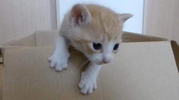 必死に脱出を試みる子猫、かわいすぎ 阿鼻叫喚の視聴者からコメントの嵐「尊い」「キュンとする」「俺の方がかわいい」