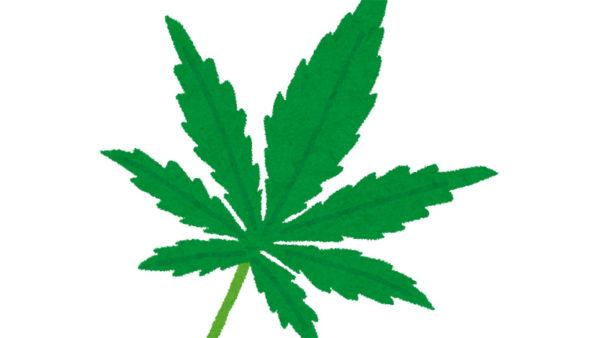 医療用大麻規制で苦しむ難病患者がいる!?――大麻=麻薬という誤解を作った地上波メディア