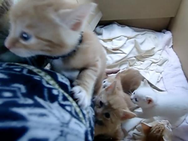 """7匹の""""生後1ヶ月の子猫""""が入ったトレジャーボックスを発見…! 腕を必死によじ登ろうとする姿に「これぞ七福神」「『蜘蛛の糸』か」の声"""