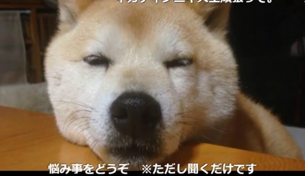 眠そうな犬を人々の悩みの弾幕が襲う! 眠気を土俵際で持ちこたえて皆の悩みを聞くワンちゃんに「ありがとう」の声