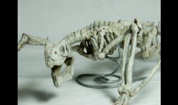 """『モンハン』ティガレックスの""""化石""""を自作してみた。本物の恐竜さながらの作り込みに「剥ぎ取られた結果がこれだよ!」「竜骨【全】」の声"""