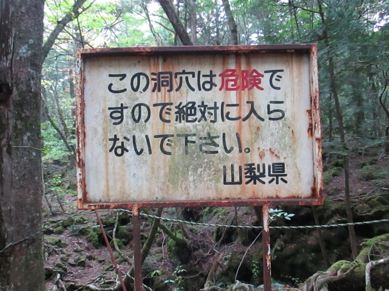 の 樹海 富士
