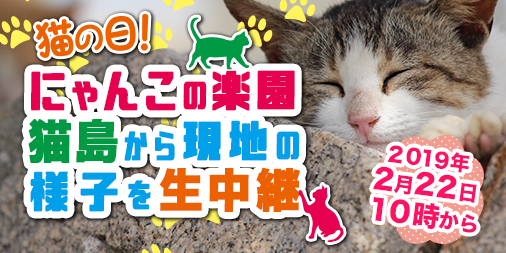 にゃんこの楽園・宮城県石巻市「田代島」より生中継! 2月22日(金)10時より放送開始【猫の日】