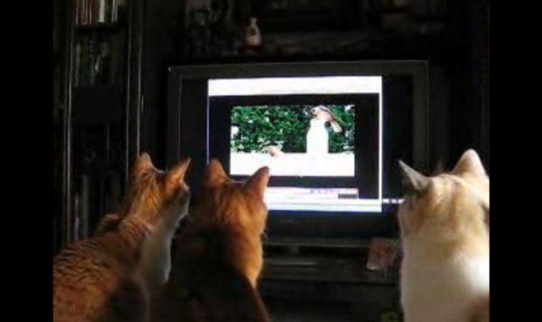 """猫に""""スズメ動画""""を見せたらどうなる…!? 興味津々でさまざまな行動を繰り広げる猫ちゃんたちの姿に「くそっ、かわいすぎる!」「ガン見w」【猫の日】"""