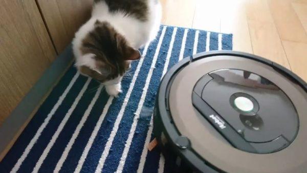なんという悲劇! 猫ちゃんのおやつがルンバの餌に…「全米が泣いたw」な展開に、飼い主さんの神の手が発動!