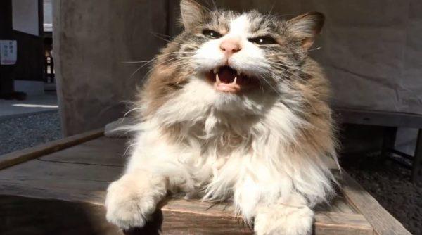 """もっと撫でてくれニャン。猫好き憧れの""""猫神社""""京都の梅宮大社で思いっきりモフッてきた"""