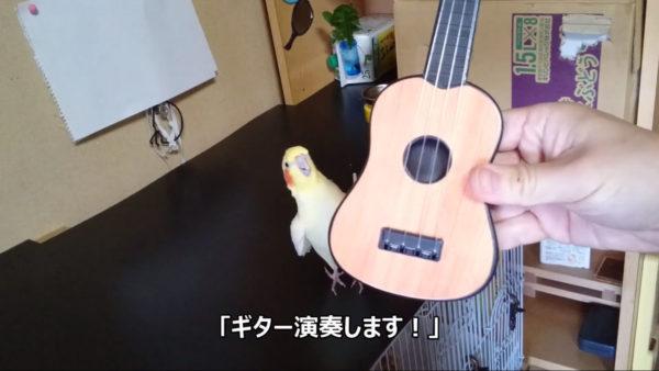 """オカメインコがギターを…演奏? 衝撃の""""合奏""""や、一生懸命に楽器をつつきまくる姿に「違う、そうじゃない」の声"""