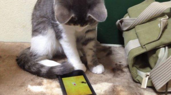 """子猫VSスマホの中の金魚…終わりの見えない猫ちゃんの""""異種格闘技""""に「くっそかわいい」「テシテシテシ」「噛むなw」"""